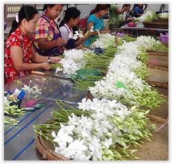 wholesale orchid