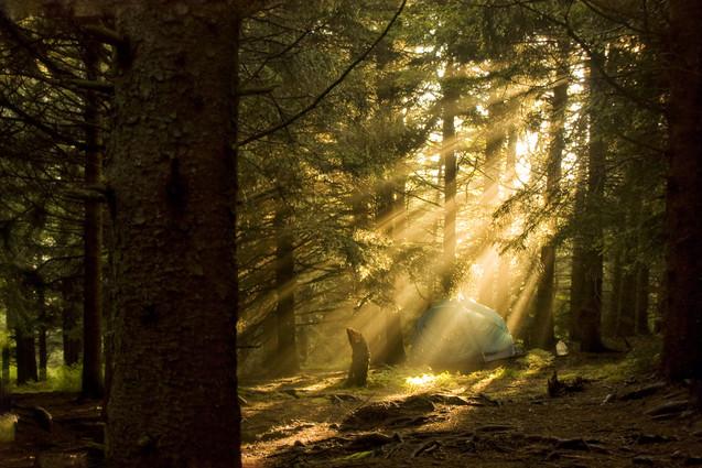 Neighbors // Pisgah National Forest, NC