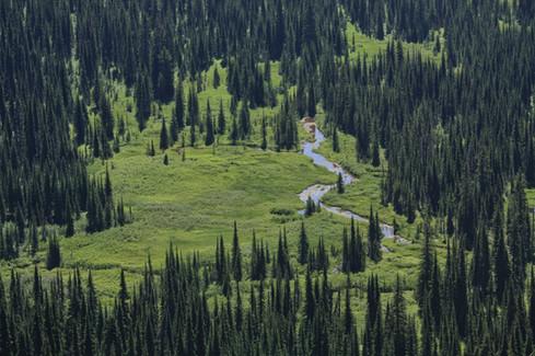 Nature // Glacier National Park, MT
