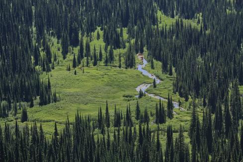 Meadow  //  Glacier National Park, MT