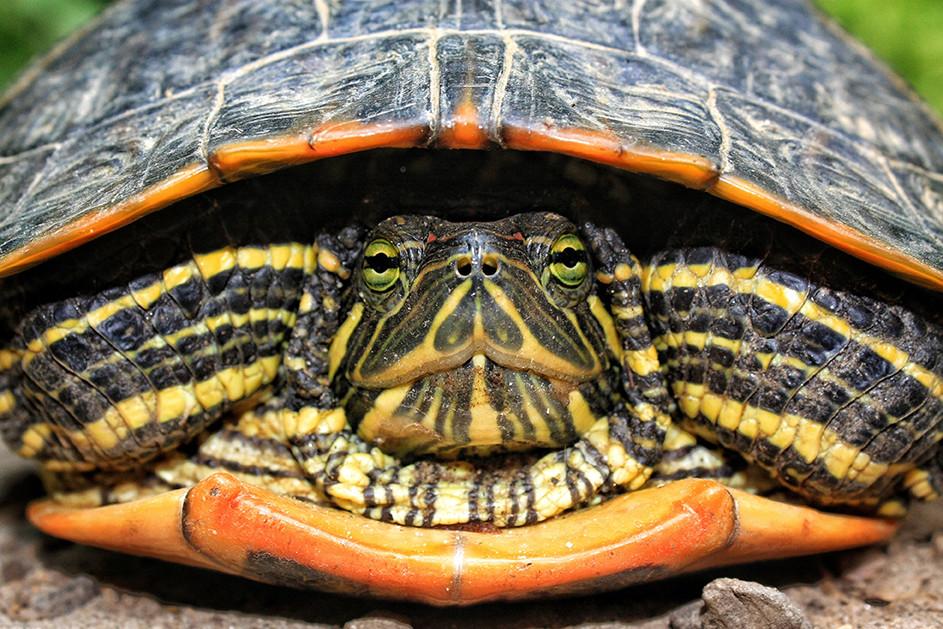 Turtle // Asheville, NC