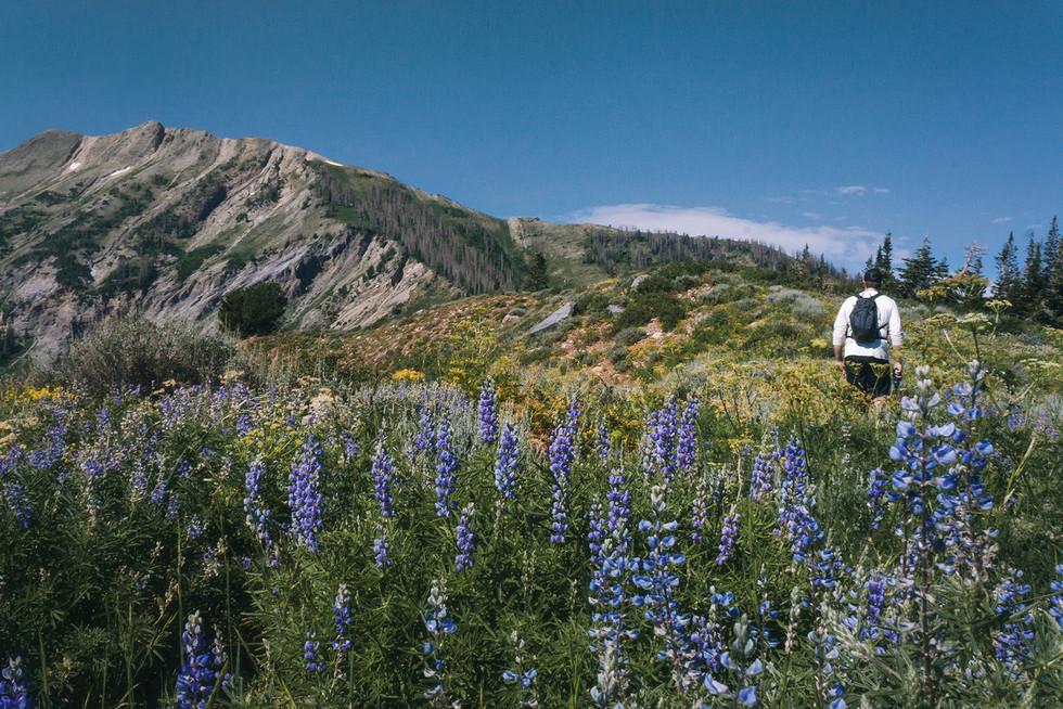 Summer Hike // Mt. Nebo, UT