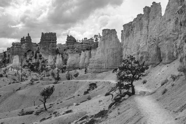 Trail of Hoodoos // Bryce Canyon National Park, UT