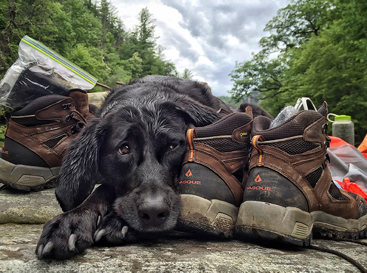 Adventure Dog // Pisgah National Forest, Linville Gorge, NC