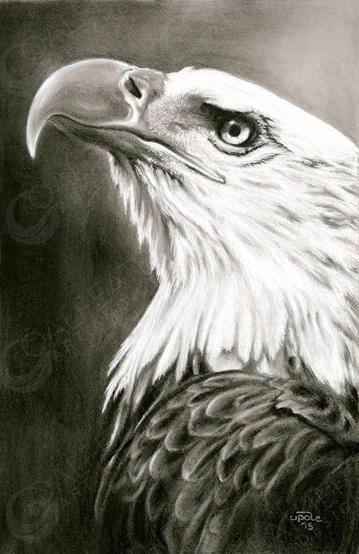 Hope_Bald Eagle.jpg