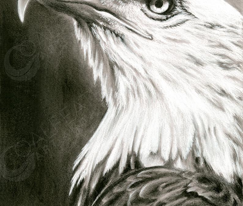 Hope_Bald Eagle