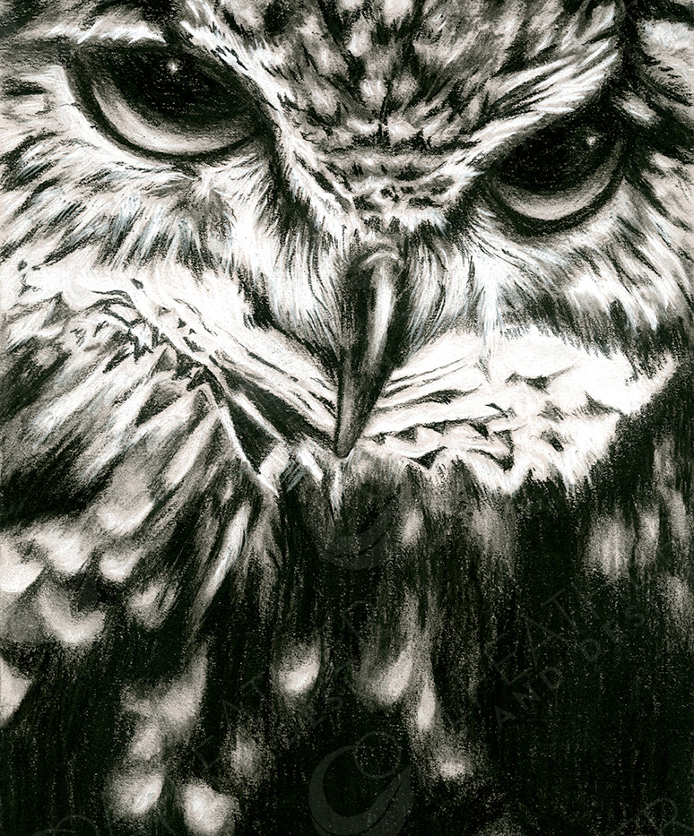 Watchful-Owl