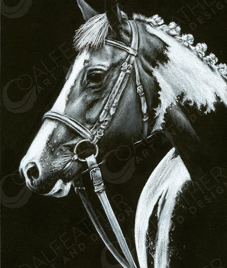 Cassidy_Paint Horse