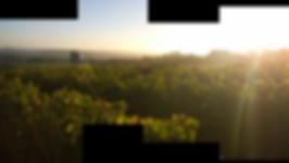 Vue des terres viticolesdu Domaine Badiller à Cheillé