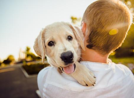 #GenreTuesday - Dog Stories