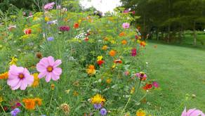 2. Créez une prairie fleurie...