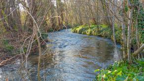 Un environnement, une biodiversité