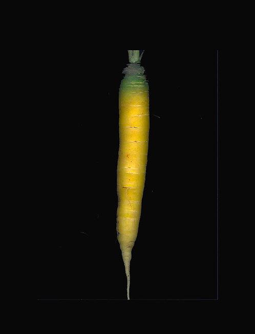 Carotte jaune (vendu au kilo)