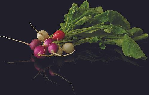 Radis multicolore France Petit producteur (vendu à la botte)