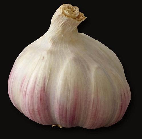 Ail rose de Lautrec France Petit producteur (vendu par lot de 3 têtes)