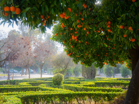 The Future May be Orange: Seville is Turning Leftover Oranges into Renewable Energy