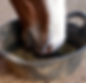 horse_eating_from_bucket_large_edited.pn