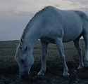lone-horse-at-night_4yhpm07g__F0000.png