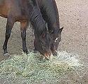 240px-HorsesAndHay_edited.jpg