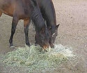 240px-HorsesAndHay.jpg