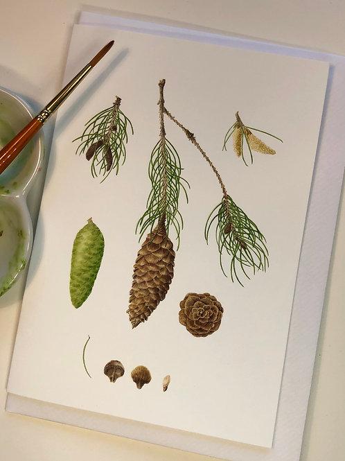 Himalayan Spruce Card A5