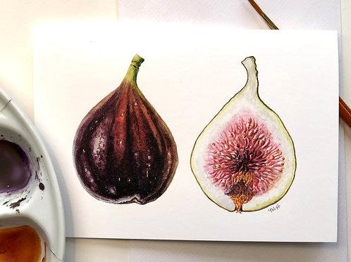Fig Card A6
