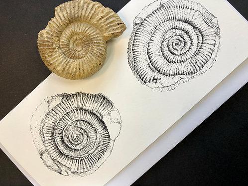 Ammonite Card DL