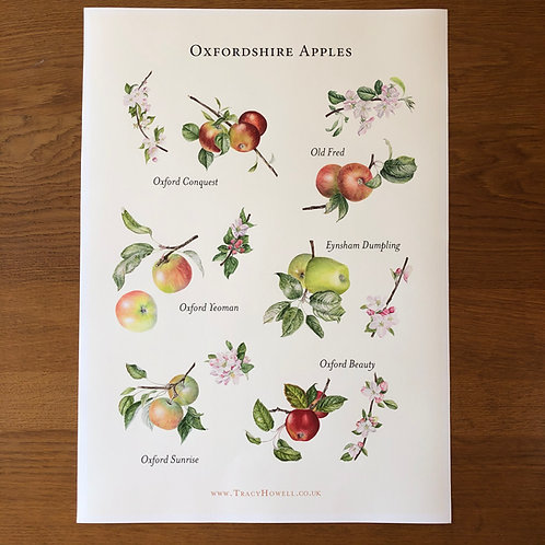 Oxfordshire Apples Print