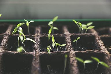 plant-1474807_1920.jpg
