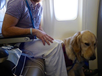 Emergency landing avoided due to diabetic alert dog, John & Nikon