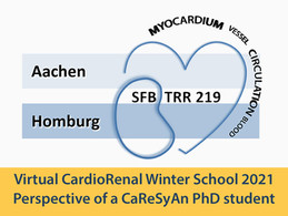 Virtual CardioRenal Winter School 2021 - Perspective of a PhD student from CaReSyAn