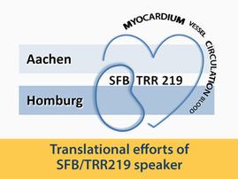Translational efforts from SFB/TRR219 speaker Prof. Jankowski awarded