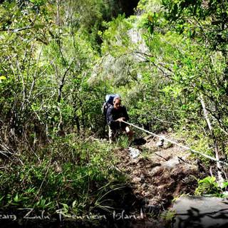 Sentier du plateau Fleur Jaunes