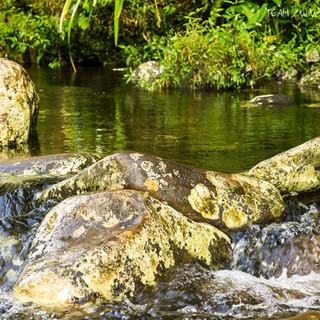 rivière bélouve île de la Réunion