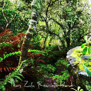 forêt de la roche merveilleuse Cilaos