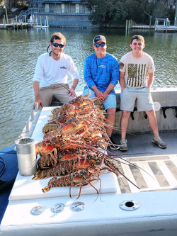 Limit of Spiny Lobster