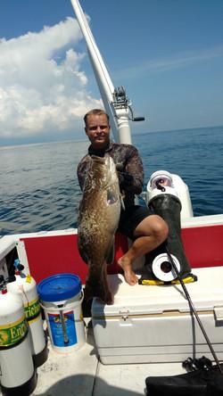 Gulf Gag Grouper