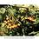 Thumbnail: Plantes à baies & petits fruits