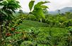 Origin: Mexico – Fair Trade Organic