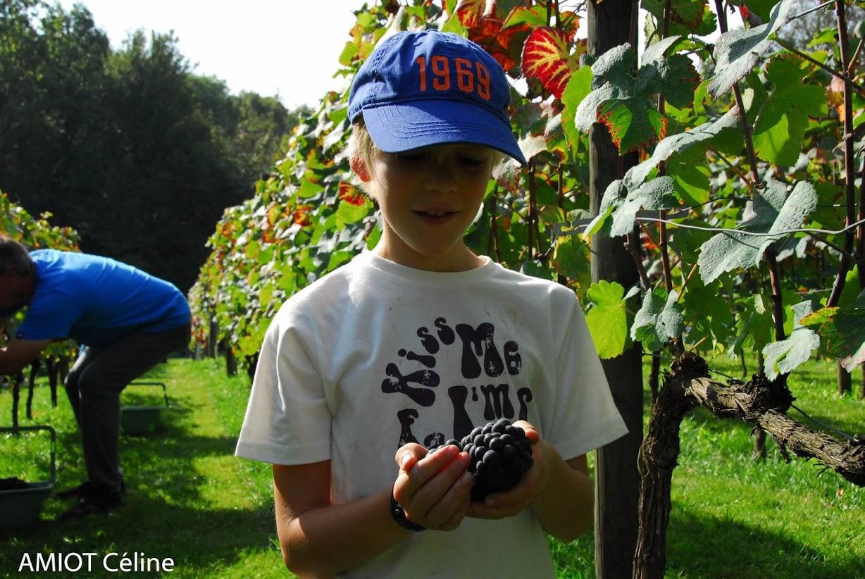 www.vigneenvie.fr