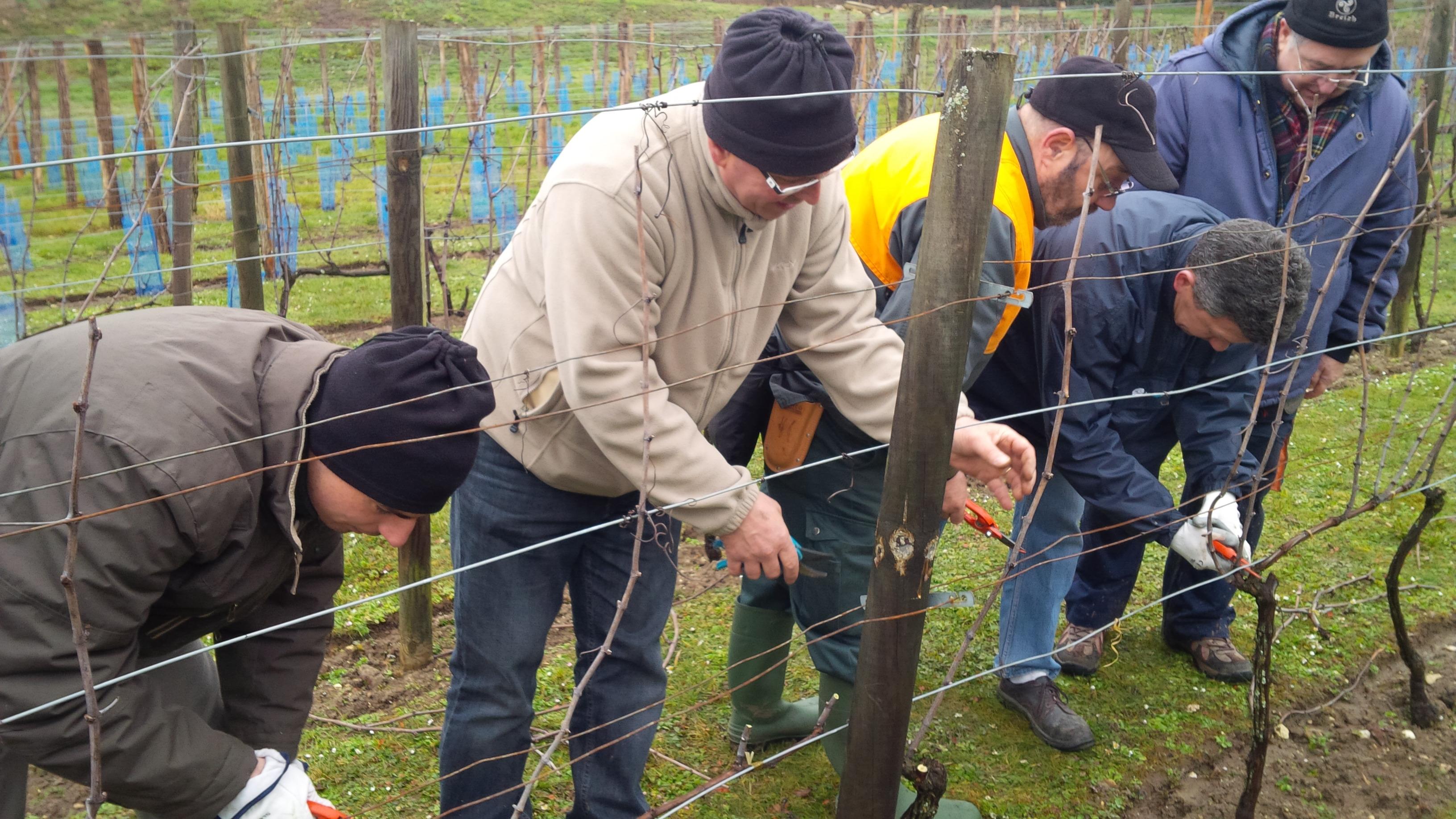 www.vigneenvie