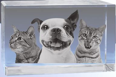 Pets rectangle Crystal (large)