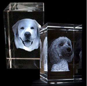 Pets rectangle Crystal (X-large)