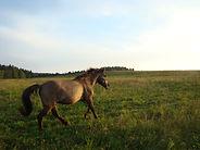 konie (30).JPG