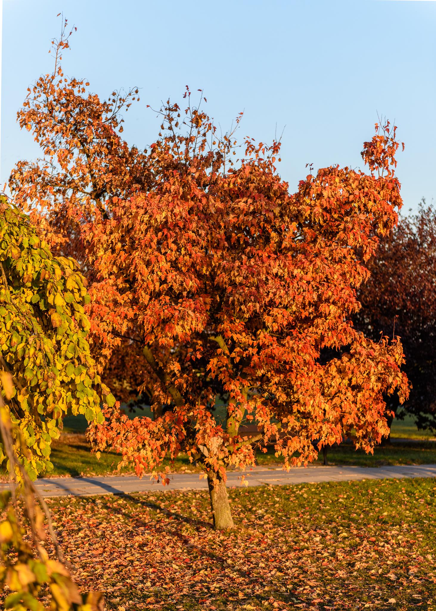 Jesień w Opolu