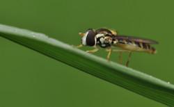Makro owad