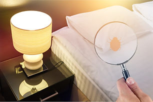 Hand with magnifying glass detecting bed