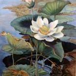 Vicky's lotus