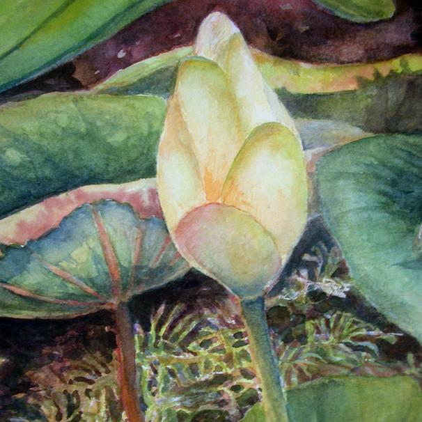 Lotus V_detail