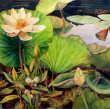 Lotus V